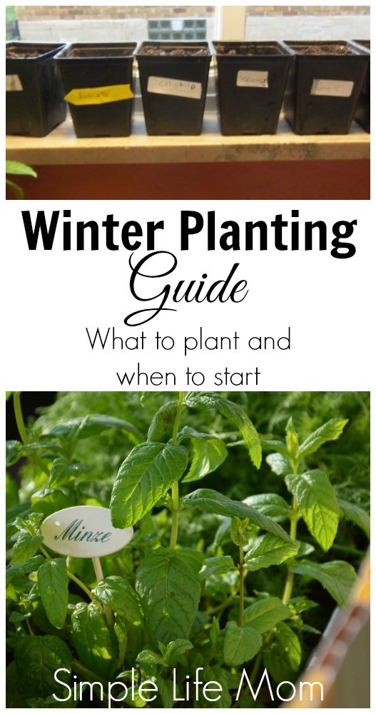 Winter Planting Guide - what to plant and when to start from Simple Life Mom