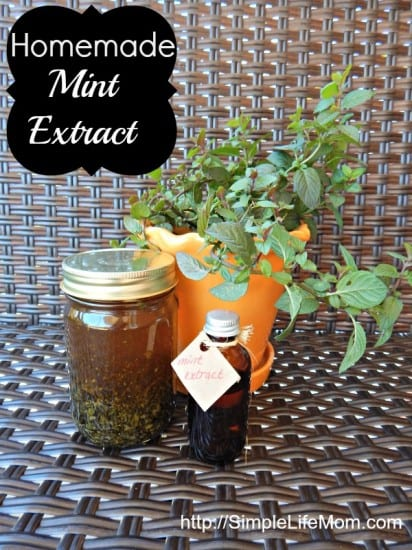 Homemade Mint Extract - easy to make and only takes one month to steep