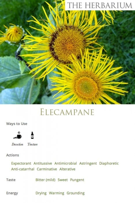 Learning About Herbs - ELECAMPANE- Monograph social
