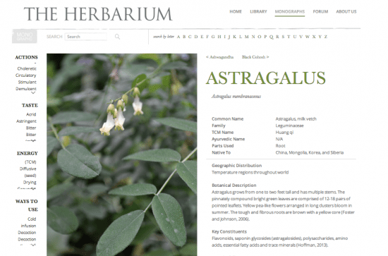 Learning About Herbs - Featured Monograph from The Herbarium