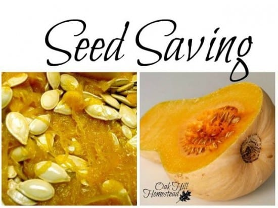Featured on the Homestead Blog Hop - Seed Saving