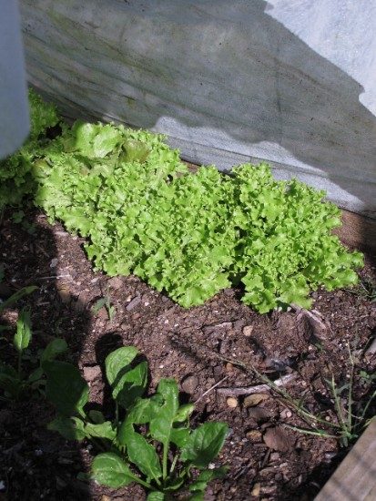 Featured on the Homestead Blog Hop -Prepping the Garden for Winter