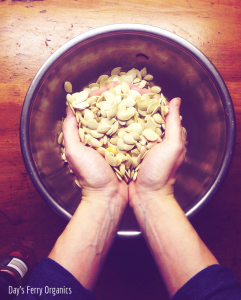 Featured on the Homestead Blog Hop - Pumpkin Seeds with Spice