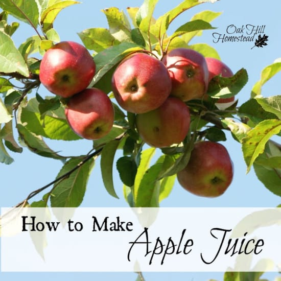 Featured on the Homestead Blog Hop - How to Make Apple Juice