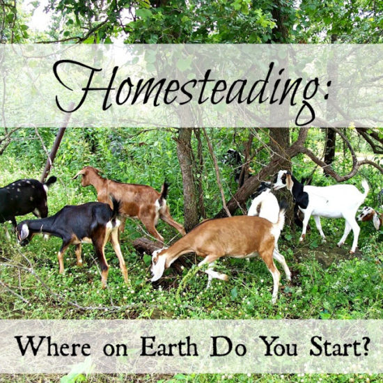 Homestead Blog Hop Feature - Where to start