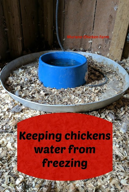 Homestead Blog Hop Feature - Murano Chicken Farm