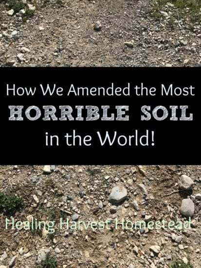 Homestead Blog Hop Feature - Healing Harvest Homestead