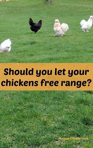 Homestead Blog Hop Feature free_range_chickens