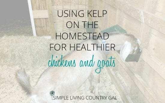 Homestead Blog Hop - kelp-on-the-homestead