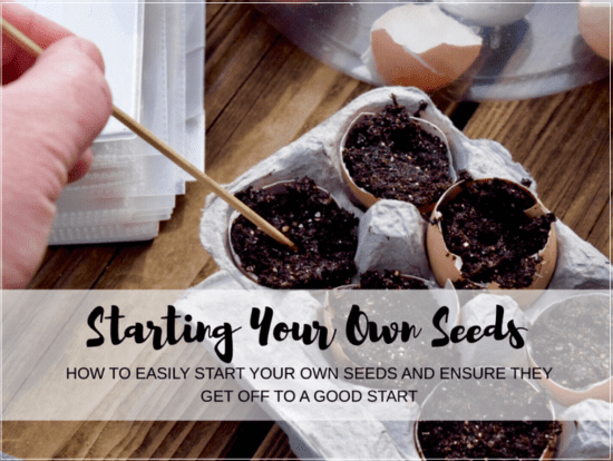 Homestead Blog Hop Feature - Starting Your Own Seeds