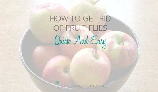 Homestead Blog Hop Feature - How to get-rid-of-fruit-flies