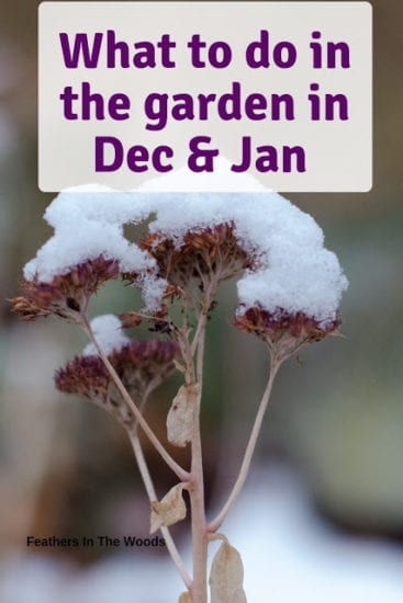Homestead Blog Hop Feature - What to do in the garden in December and January