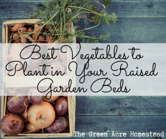 Homestead Blog Hop Feature - Best-Vegetables-to-Plant-in-Your-Raised-Garden-Beds