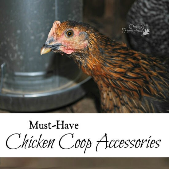 Hoemstead Blog Hop Feature - Must Have Chicken Coop Accessories