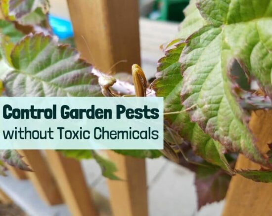 Homestead Blog Hop Feature - control-garden-pests-without toxic chemicals