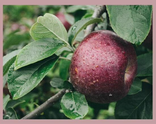 Homestead Blog Hop Feature - How to Plan and Plant a Homestead Orchard