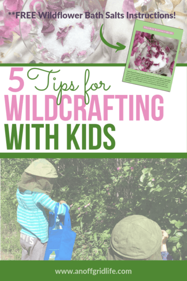 Homestead Blog Hop Feature - 5-Tips-for-Wildcrafting-With-Kids