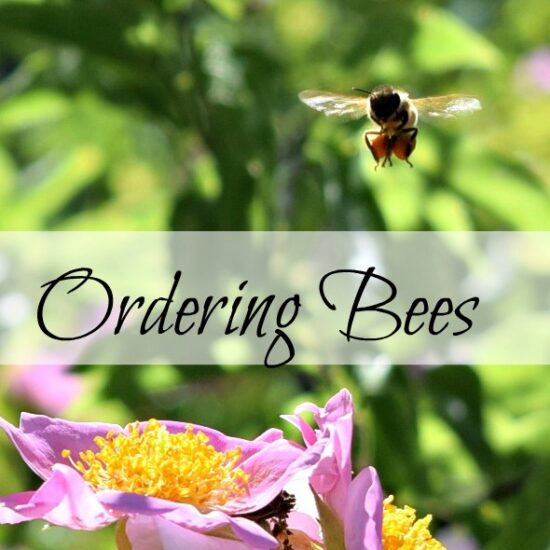 Homestead Blog Hop Feature - 4 Tips for Ordering Bees