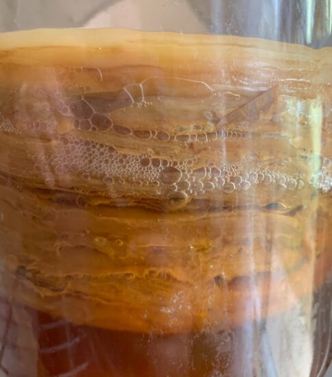 Homestead Blog Hop Feature - Benefits and Uses for Scobys in Kombucha