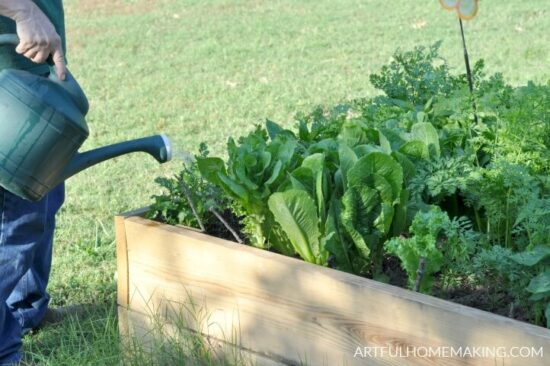 Homestead Blog Hop Feature - gardening-for-beginners-tips
