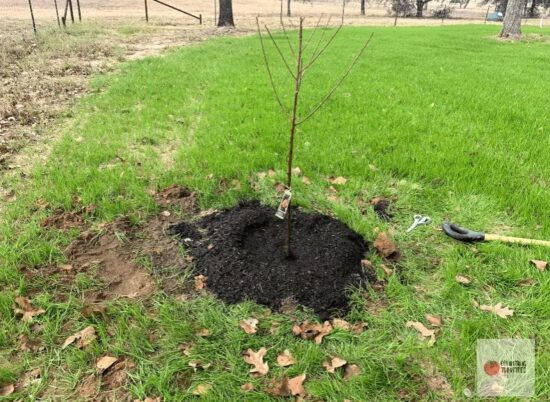 Homestead Blog Hop Feature - How-to-Plant-Bare-Root-Fruit-Trees