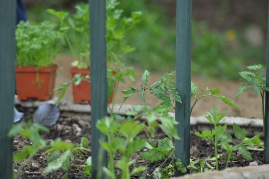 Homestead Blog Hop Feature - How to Choose the Best Garden Space