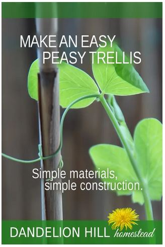 Homestead Blog Hop Feature - How to Make an Easy Peasy Trellis