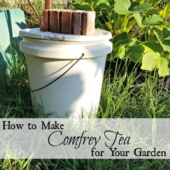 Homestead Blog Hop Feature - How to Make Comfrey Tea for Your Garden